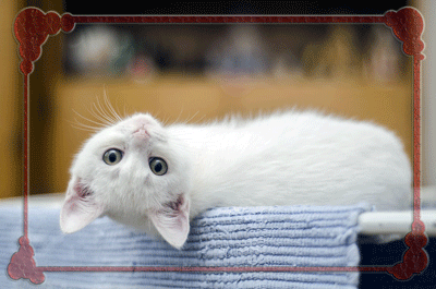 kittenicon.png